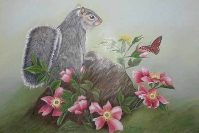 Stiffler-squirrel-colored-pencil
